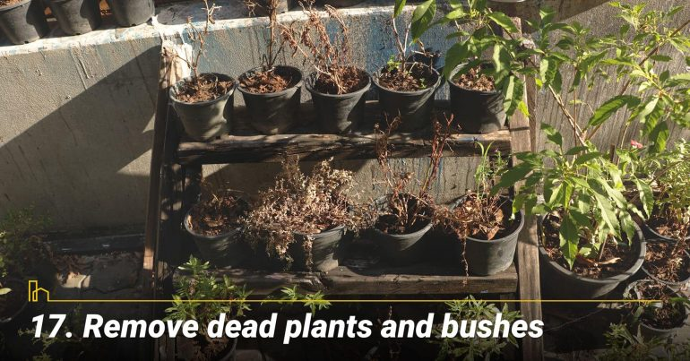 Remove dead plants and bushes