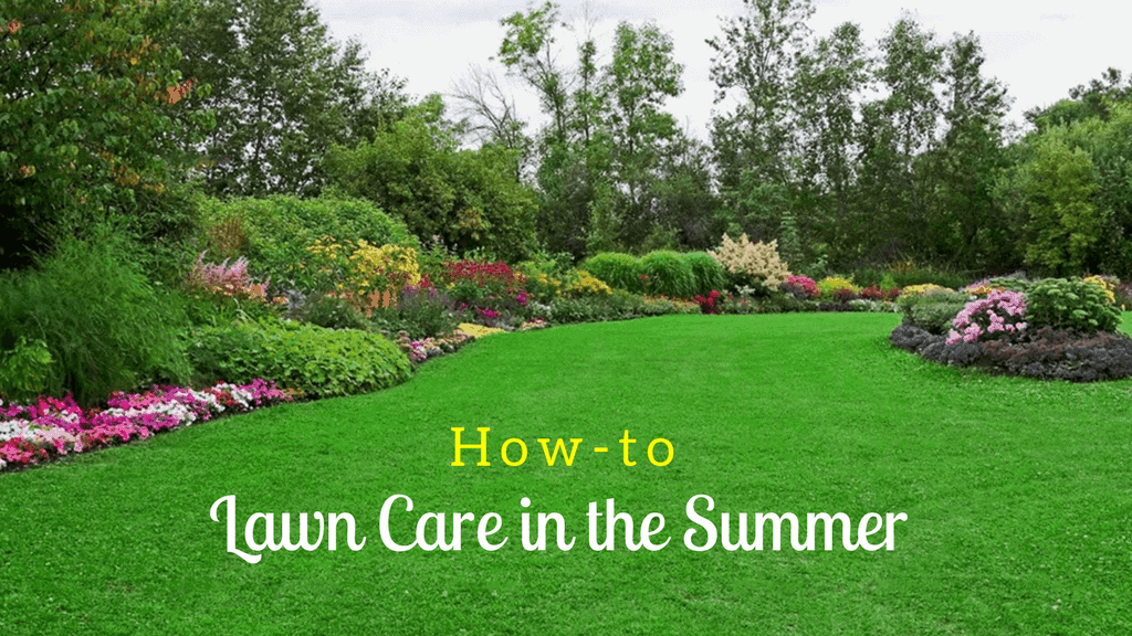 How-to Lawn Care in the Summer