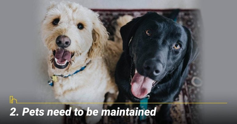 Pets need to be maintained
