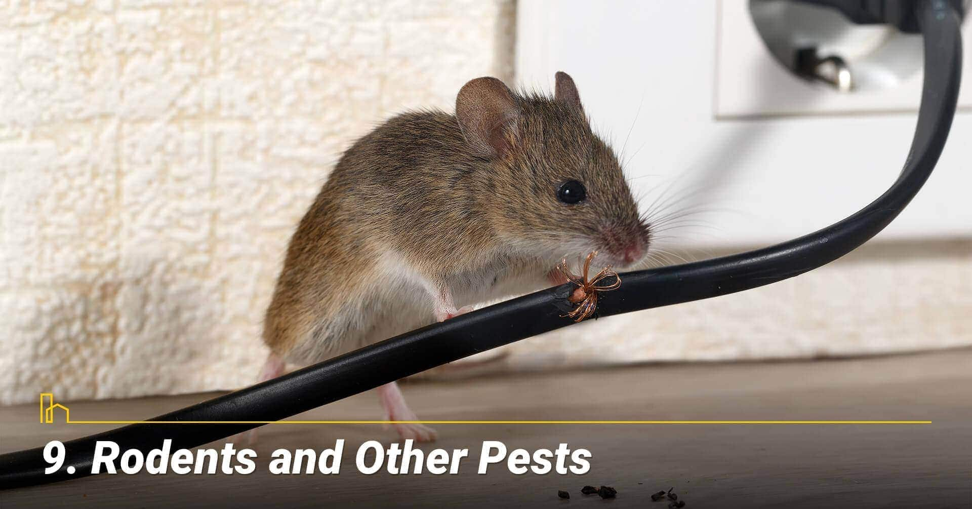 Rodents and Other Pests