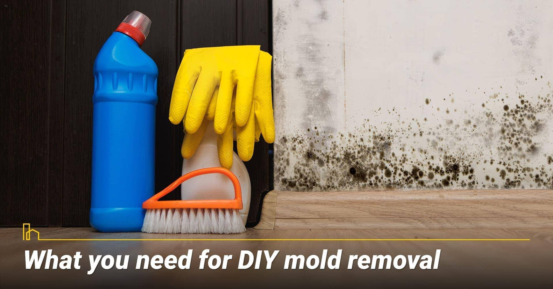 What you need for DIY mold removal