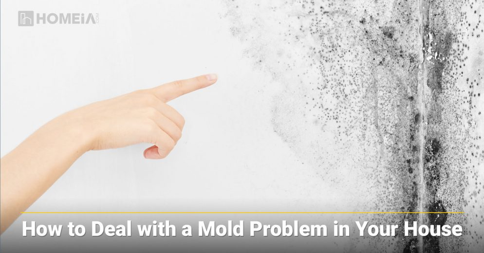 How to Deal with a Mold Problem in Your House