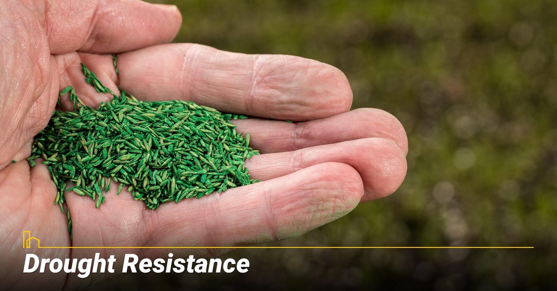 Drought Resistance, grow drought resistance grass