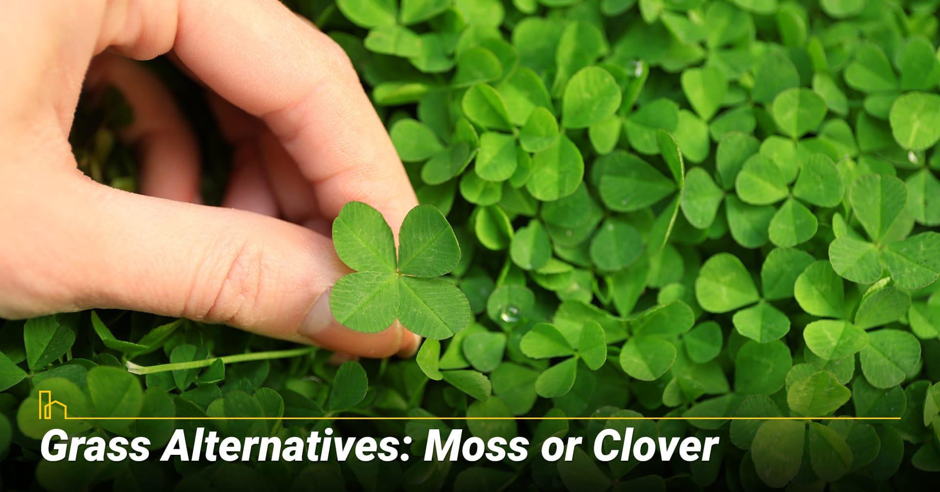 Grass Alternatives: Moss or Clover