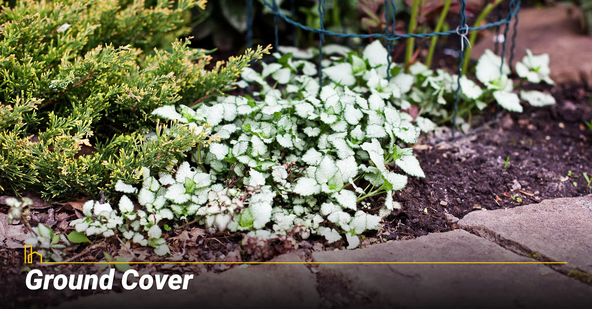 Ground Cover, cover bare ground