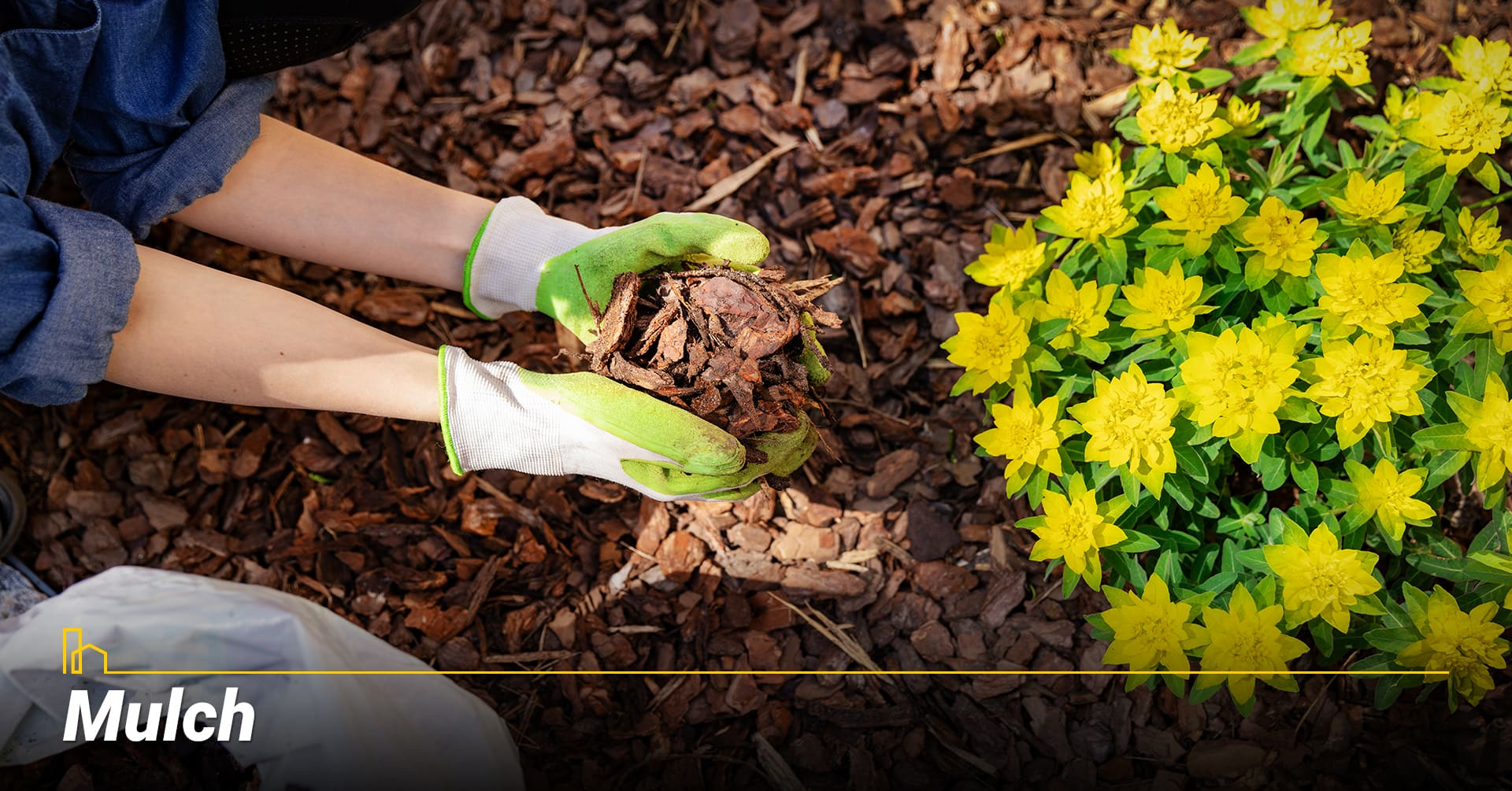 Mulch, cover your garden bad with mulch
