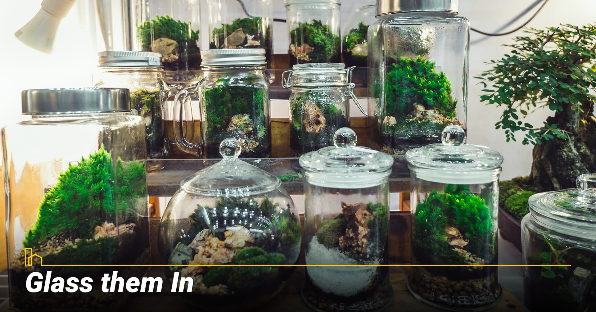 Glass them In, Use glass terrariums