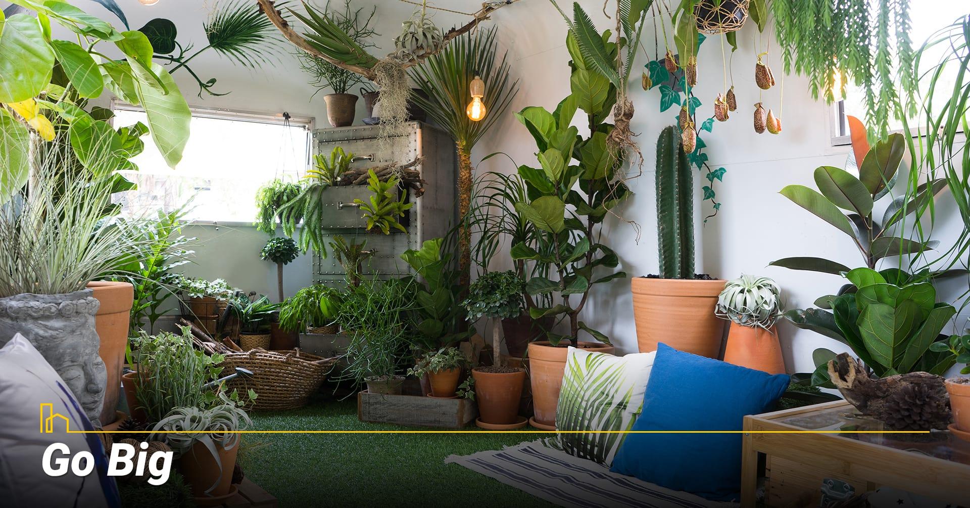 Go Big, Consider bigger plants