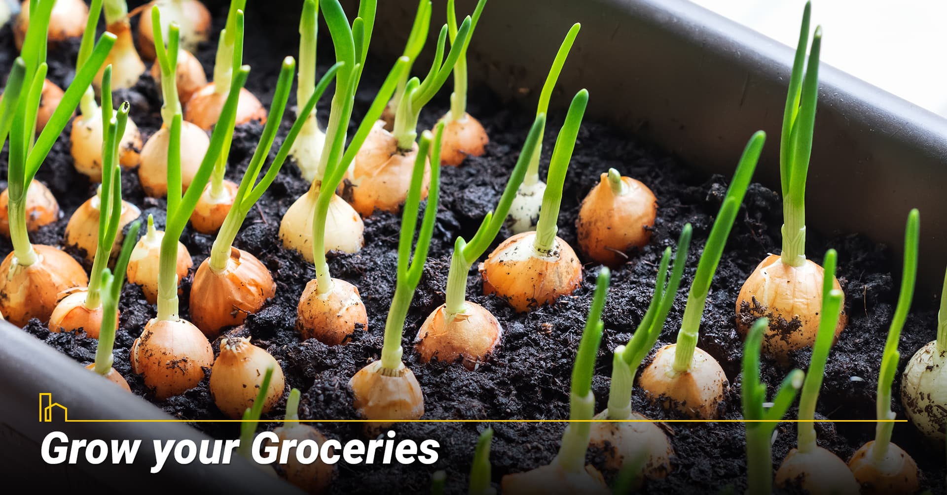 Grow your Groceries, grow your own herbs