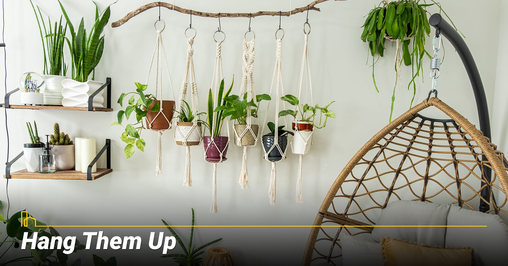 Hang Them Up, Make good use of indoor plants