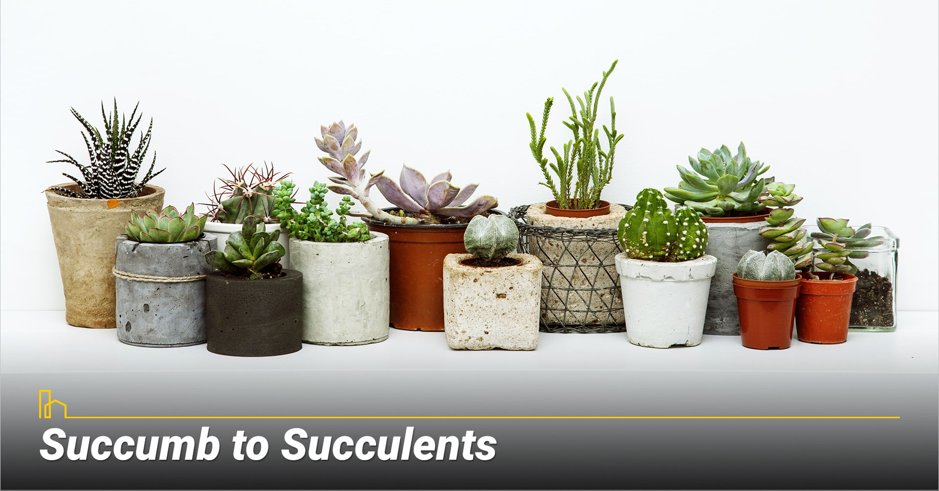 Succumb to Succulents, consider low maintenance plants