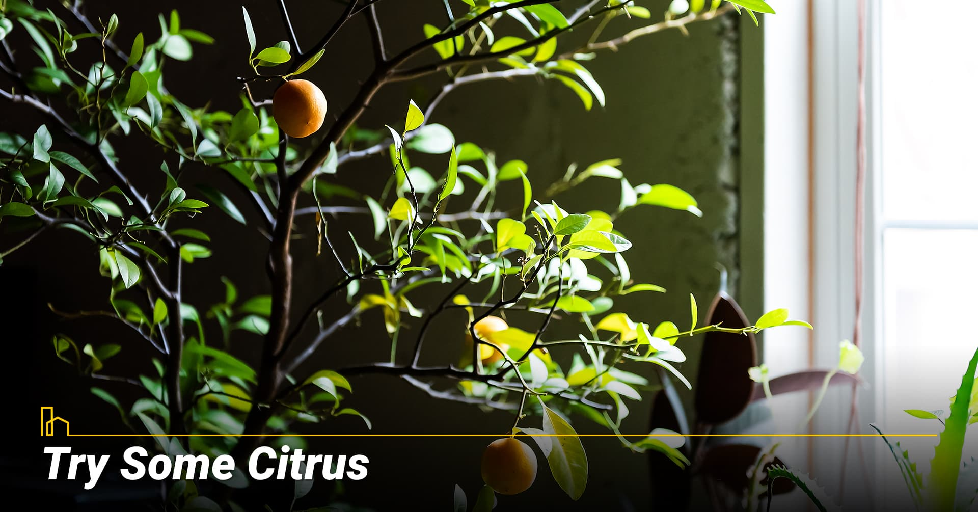 Try Some Citrus, Consider small fruit trees