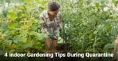 4 indoor Gardening Tips During Quarantine