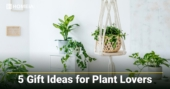 5 Gift Ideas for Plant Lovers