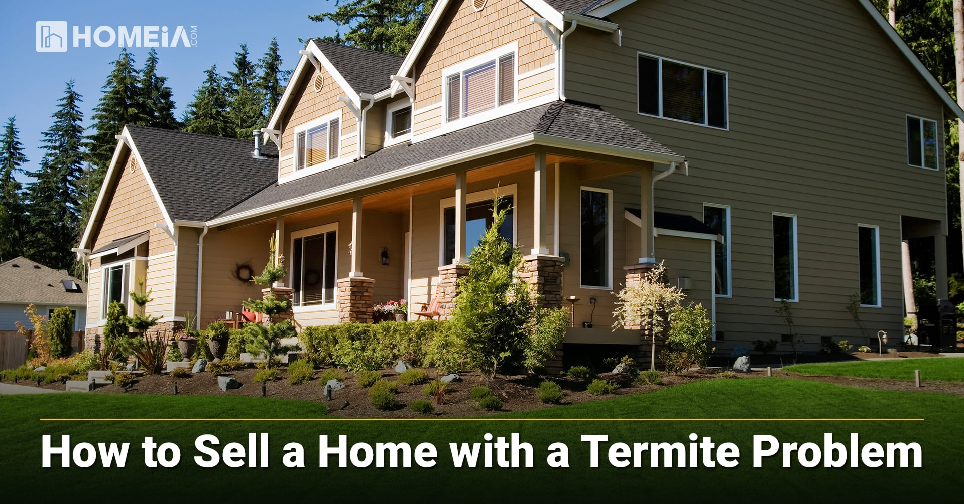 How to Sell a Home with a Termite Problem