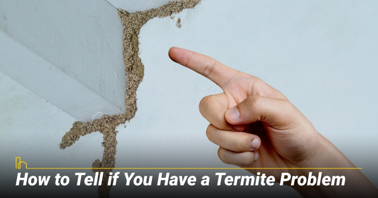 How to Tell if You Have a Termite Problem