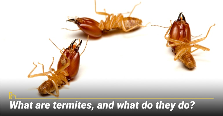 What are termites, and what do they do